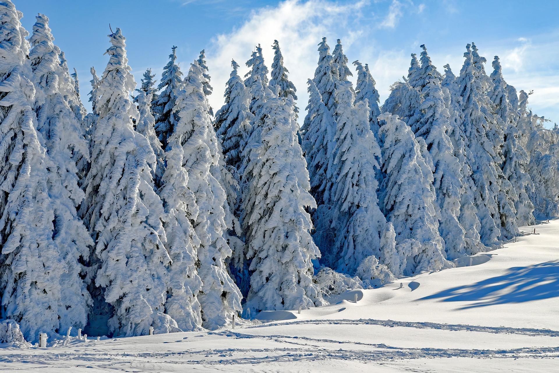 Καιρός – Αρνιακός: Θα έχουμε χιόνια τα Χριστούγεννα (video)